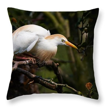 Cattle Egret In A Tree Throw Pillow