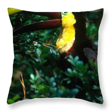 Chestnut-mandibled Toucan Throw Pillow by Art Wolfe