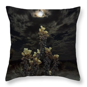 Opuntia Bigelovii Home Decor
