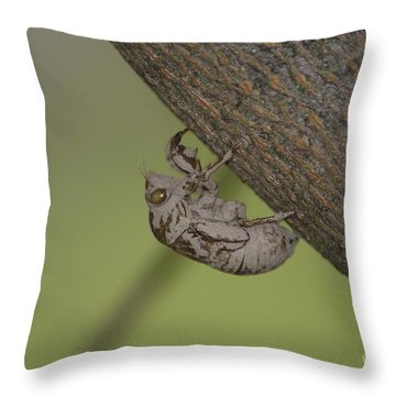 Cicada Throw Pillow by Randy Bodkins