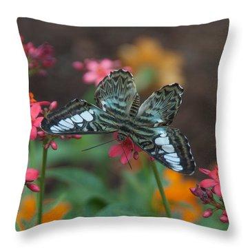 Clipper Butterfly 6150-052513-1cr Throw Pillow