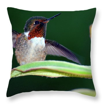 Close-up Of A Scintillant Hummingbird Throw Pillow