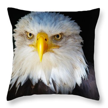 Closeup Portrait Of An American Bald Eagle Throw Pillow by Nick  Biemans
