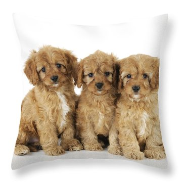 Cockapoo Puppy Dogs Throw Pillow