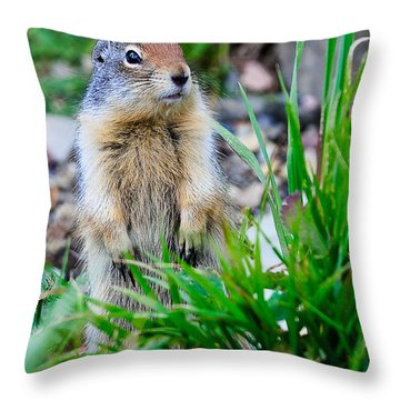 Columbian Ground Squirrel Throw Pillow