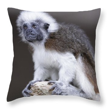Throw Pillow featuring the photograph Cotton Top Tamarin by Shoal Hollingsworth