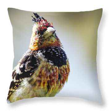 Crested Barbet Throw Pillow by Pravine Chester