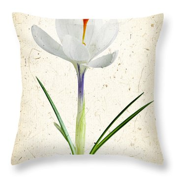 Crocus Flower Throw Pillow by Elena Elisseeva