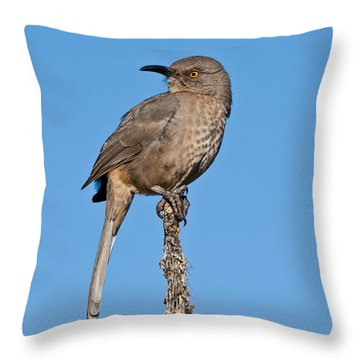 Curve-billed Thrasher Throw Pillow