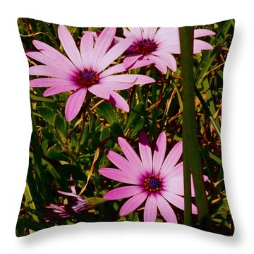Throw Pillow featuring the photograph Daisies by Cassandra Buckley