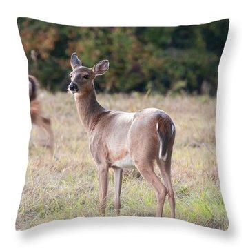 Throw Pillow featuring the photograph Deer At Paynes Prairie by Paul Rebmann