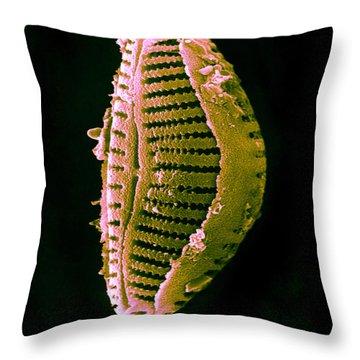 Diatom Throw Pillow by David M. Phillips