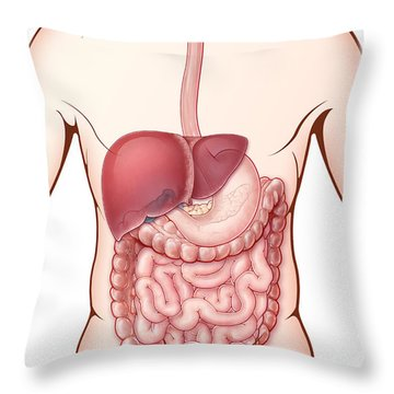 Digestive System, Illustration Throw Pillow