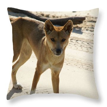 Dingo Throw Pillow by Carol Ailles