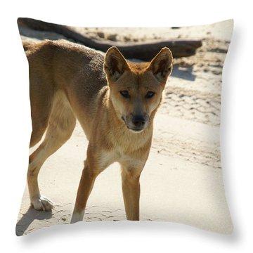 Dingo Throw Pillow