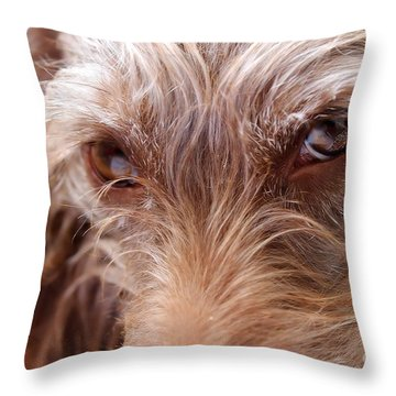 Dog Stare Throw Pillow