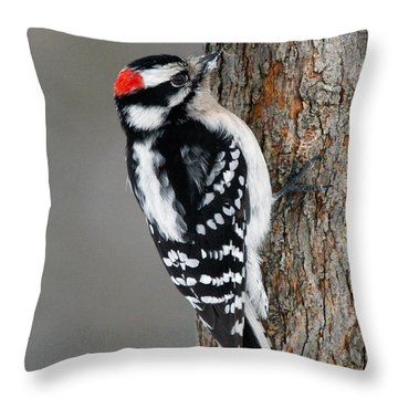 Downy Woodpecker Throw Pillow by Timothy McIntyre