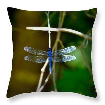 Dragonfly Throw Pillow by Tara Potts