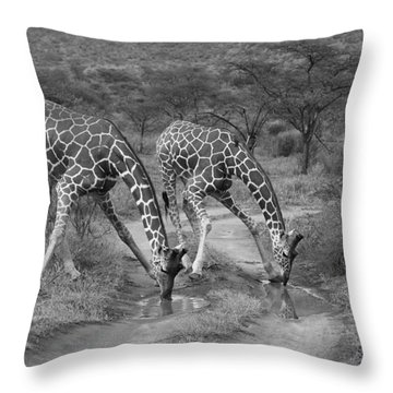 Drinking In Tandem Throw Pillow by Michele Burgess