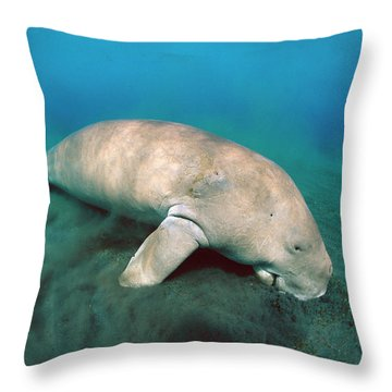 Dugong  Feeding On Sea Grass Throw Pillow by Mike Parry