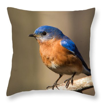 Eastern Bluebird Male 7 Throw Pillow by Douglas Barnett