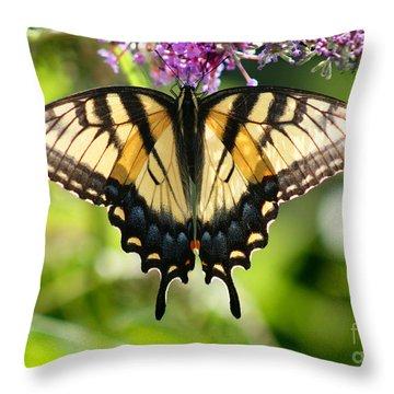 Eastern Tiger Swallowtail Butterfly Throw Pillow by Karen Adams