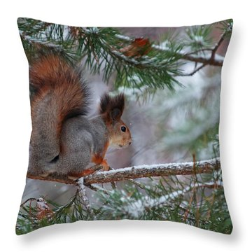 Eurasian Red Squirrel Throw Pillow by Jouko Lehto