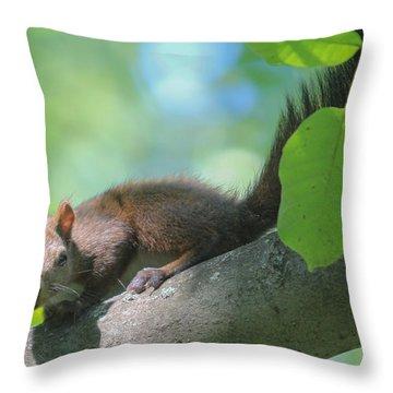 Throw Pillow featuring the photograph Euroasian Red Squirrel - Sciurus Vulgaris by Jivko Nakev