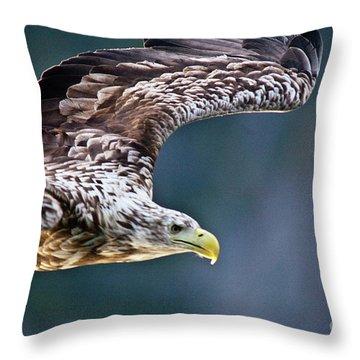 European Sea Eagle Throw Pillow by Heiko Koehrer-Wagner
