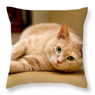 Feline Portrait Throw Pillow by Amy Cicconi