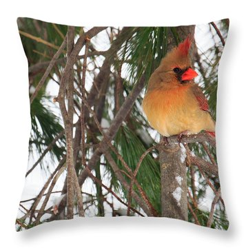 Female Cardinal Throw Pillow by Everet Regal