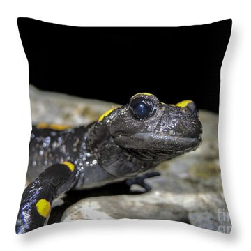 Fire Salamander Salamandra Salamandra Throw Pillow by Shay Levy