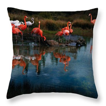 Flamingo Convention Throw Pillow