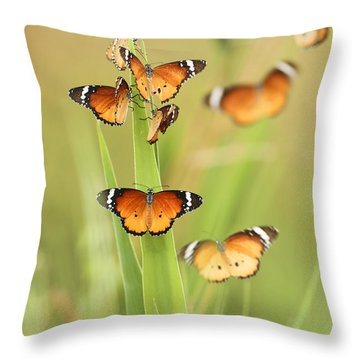 Flock Of Plain Tiger Danaus Chrysippus Throw Pillow by Alon Meir