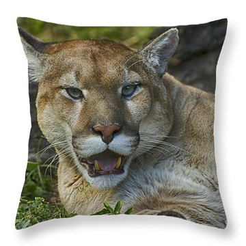 Florida Panther Throw Pillow by Anne Rodkin