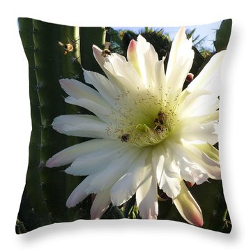 Throw Pillow featuring the photograph Flowering Cactus 1 by Mariusz Kula