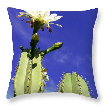Throw Pillow featuring the photograph Flowering Cactus 2 by Mariusz Kula