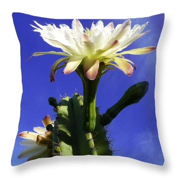 Throw Pillow featuring the photograph Flowering Cactus 3 by Mariusz Kula