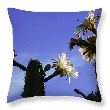 Throw Pillow featuring the photograph Flowering Cactus 4 by Mariusz Kula