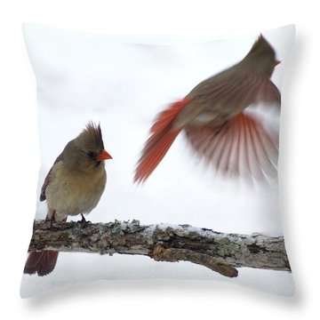 Fly Away Throw Pillow by Bill Stephens