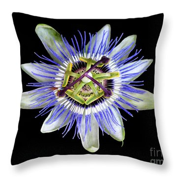 Throw Pillow featuring the photograph Fly's Passion by Jennie Breeze