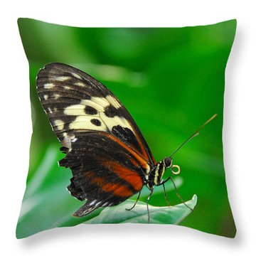 D5l15 Butterfly At Franklin Park Conservatory Throw Pillow