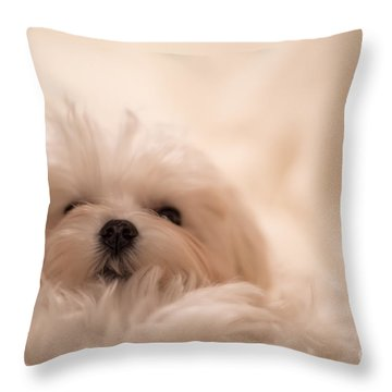 Throw Pillow featuring the photograph Fresh From A Long Winter's Nap by Lois Bryan