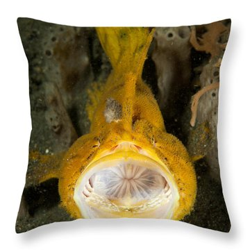 Frogfish With Large Lure, Open Mouth Throw Pillow