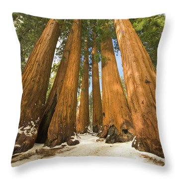 Giant Sequoias Sequoia N P Throw Pillow