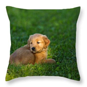 Golden Retriever Puppy Throw Pillow by Linda Freshwaters Arndt