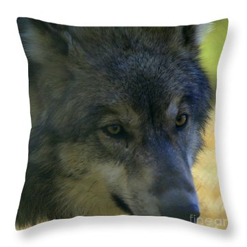 Gray Wolf Throw Pillow by Neal Eslinger