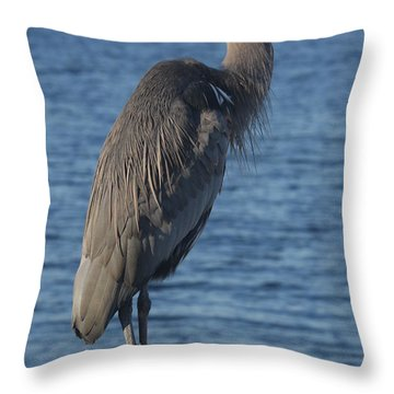 Throw Pillow featuring the photograph Great Blue Heron  by Christiane Schulze Art And Photography