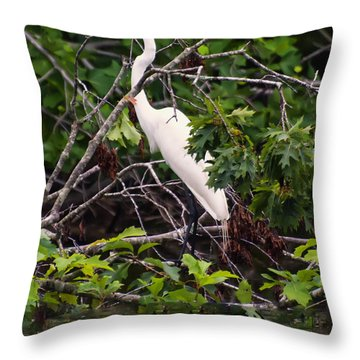 Great White Egret Throw Pillow by Chris Flees