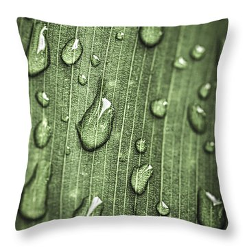 Green Leaf Abstract With Raindrops Throw Pillow
